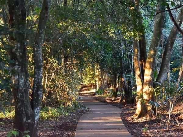 maleny trail 2