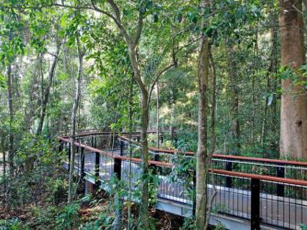 rsz_mary_cairncross_scenic_reserve_rainforest_discovery_centre_2-450x250